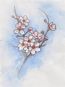 Cherry Blossom Flower Pencil Drawing | www.imgkid.com ...