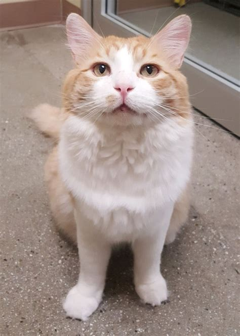 cats  fiv   normal happy lives orange county