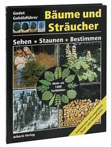 Immergrüne Sträucher Und Bäume : waldschweiz ~ Michelbontemps.com Haus und Dekorationen