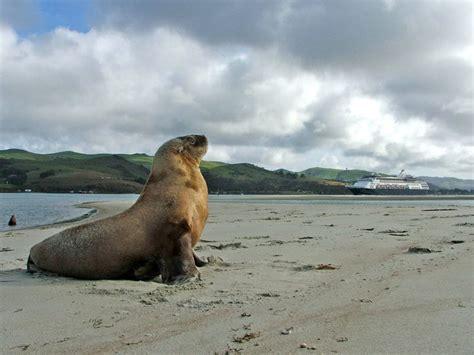 Elm Wildlife Tours Otago Peninsula Dunedin New Zealand