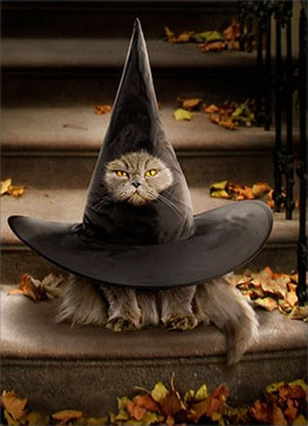 cat  witch hat funny humorous halloween card