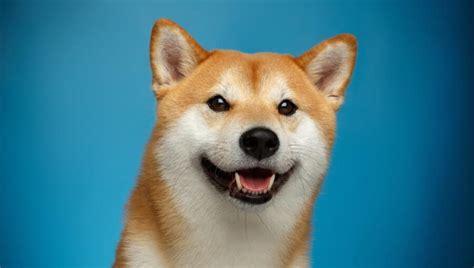 Shiba Coin Vs Dogecoin - F0hsuueczvztbm - While bitcoin ...