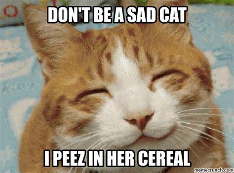 Sad Cat Meme - don t be a sad cat