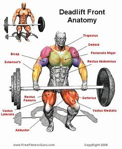 Deadlifts Work Front Muscles Too