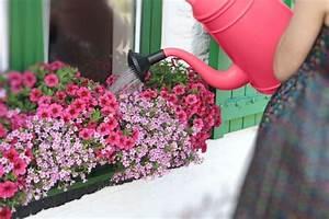 Pflanzen Die Viel Sonne Vertragen Und Wenig Wasser Brauchen : gie en mit gef hl gartenzauber ~ Frokenaadalensverden.com Haus und Dekorationen