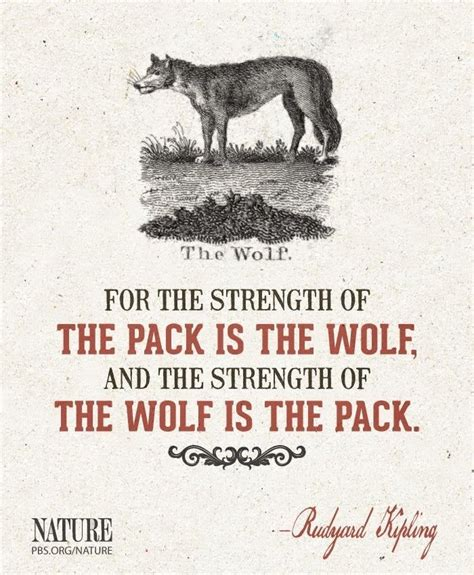 Information About Lone Wolf Quotes Yousenseinfo