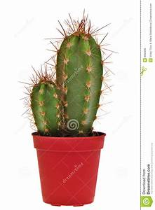 Pot A Cactus : two cactus in a pot royalty free stock image image 8662936 ~ Farleysfitness.com Idées de Décoration