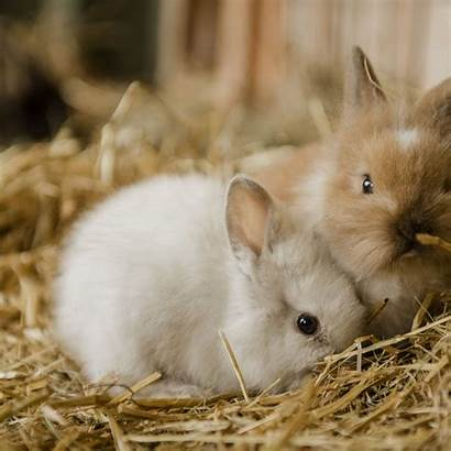 Bunny Bunnies 4k Related