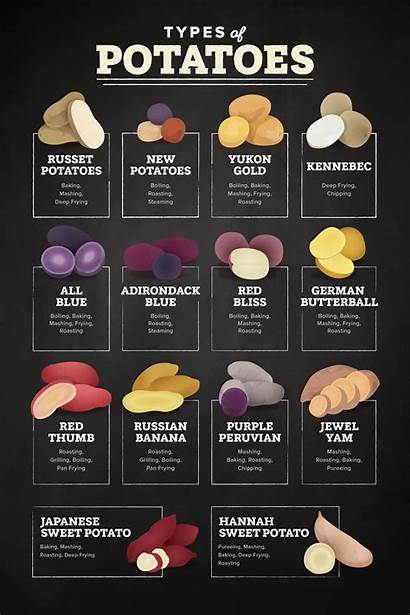 Types Potatoes Infographic Different Uses Varieties Resources