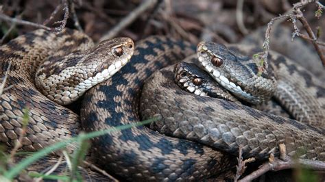 How Do Snakes Mate?   Reference.com
