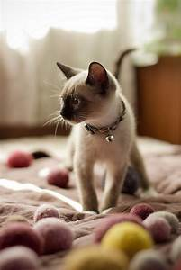 top 10 interesting facts you didn39t know about cats With can you train a cat to go outside for bathroom