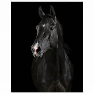 Peinture En Noir Et Blanc : tableau cheval en noir et blanc cadre toile ~ Melissatoandfro.com Idées de Décoration
