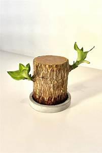 lucky wood indoor plants plantshop me