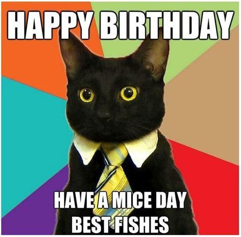beautiful cat happy birthday memes pics good morning