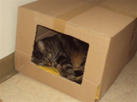 jouet pour chat fait maison jouet pour chat a fabriquer images