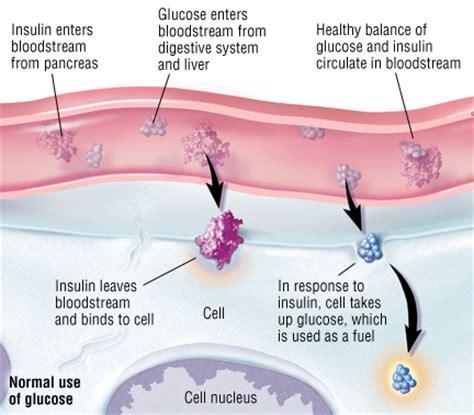pathophysiology  diabetes mellitus