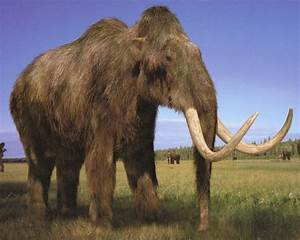 10 Extinct Creatures Thought To Still Be Alive