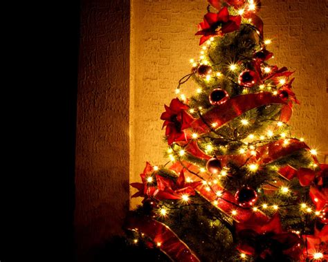The History Of Christmas Trees!