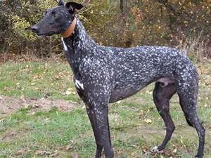 Intersting dog coat colors/markings and breeds ...
