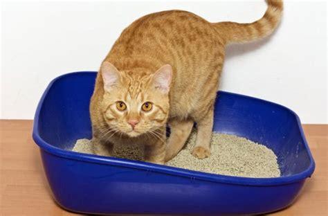 Cat Pooping Outside Litter Box Suddenly Randomly