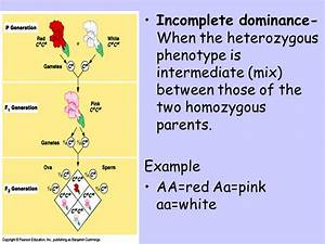 Non-Mendelian Genetics - ppt video online download