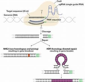 Gene Editing For Cancer Therapy  Drug Discovery