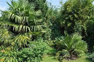 Palmen Für Den Garten : palmen und co julibilder albizze bl ht ~ Sanjose-hotels-ca.com Haus und Dekorationen