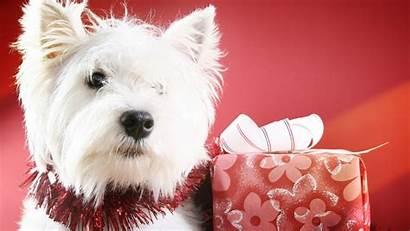 Christmas Dog Resolutions Wide Desktop