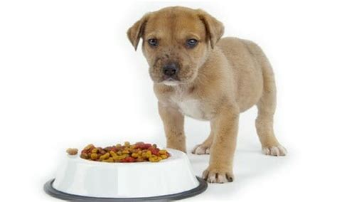 senior dog foods jul  buyers guide