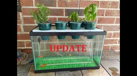 update  diy aquaponics aquarium project  month update
