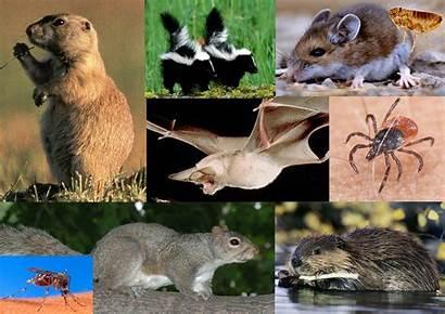 Animal Diseases Borne Health Disease Summer Prevent