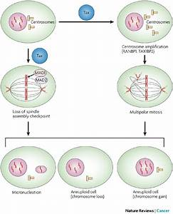Aneuploidy And Multipolar Mitosis In Htlv