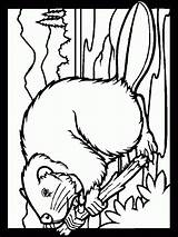 Coloring Beaver Animals Animali Disegni Bosco Imagini Printable Carte Colorare Colorat Animal Colora Animale Castori Castoro Castores Colouring Colorir Coloringpagesforadult sketch template