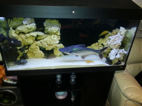 aquarium juwel 200 litres juwel 350 liter aquarium for sale in portlaoise laois from zeuswonderboy
