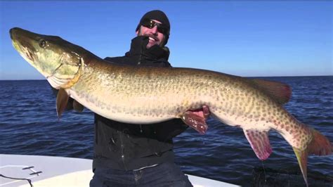 New Muskie Record Set on Lake Mille Lacs - Lakeland News ...