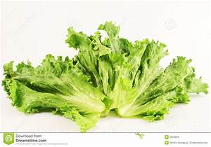 Lettuce Leaf Royalty Free Stock Photo - Image: 2254255