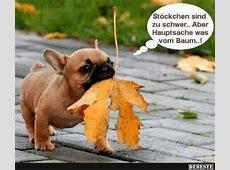 Lustige Tiere Bilder auf MemesBamscom, Besten Witzige