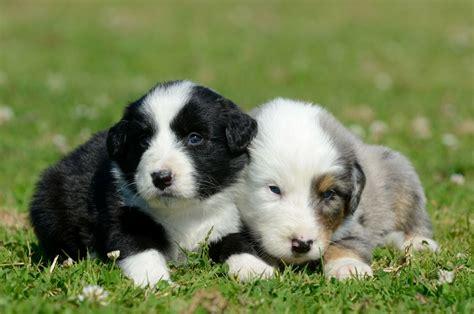 kleine hunde kaufen worauf achten beim hundewelpen kaufen
