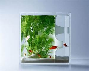 U00c9pingl U00e9 Sur Tanks  Aquariums  Terrariums