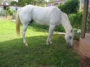 white horse stock 4 by phoenixs-stock on DeviantArt