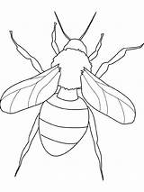 Fly Coloring Insect Pages Bugs Print Them sketch template