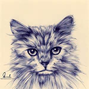 drawings of cats 19 cat drawings ideas sketches design trends