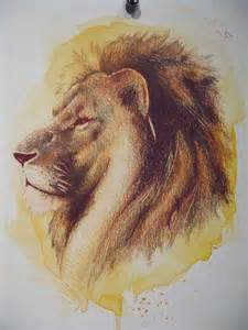 Colored Pencil Lion Drawing