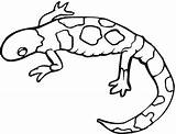 Gecko Coloring Colorful Pages Supercoloring sketch template
