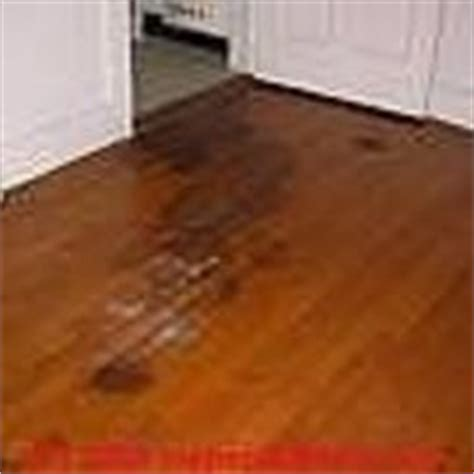 Cat Hardwood Floor Hydrogen Peroxide by Urine Remover On Mattress Stains Hydrogen