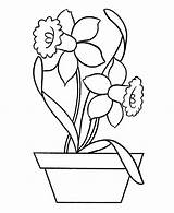 Daffodil Coloring Pottery Pages Outline Drawing Daffodils Colouring Template Flower Netart Printable Getcolorings Narcissus Sketch Bees Pag Getdrawings sketch template