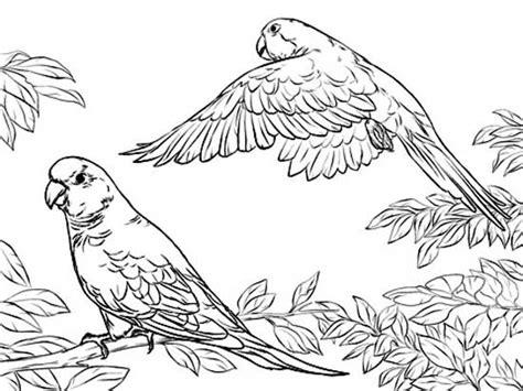 Kleurplaat Papegaai Peuters by Papegaai Kleurplaat