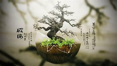 Zen Tree Bonsai Resolution