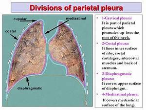 Pleura And Lung By Prof  Saeed Abuel Makarem  U0026 Dr  Sanaa