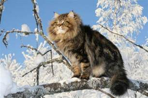 exclusively cats veterinary hospital can i buy a